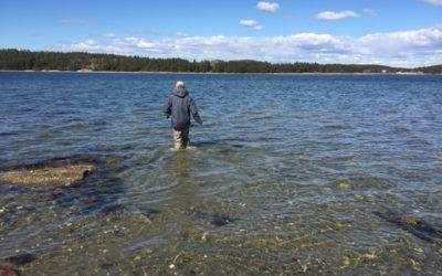 Flugfiske efter havsöring