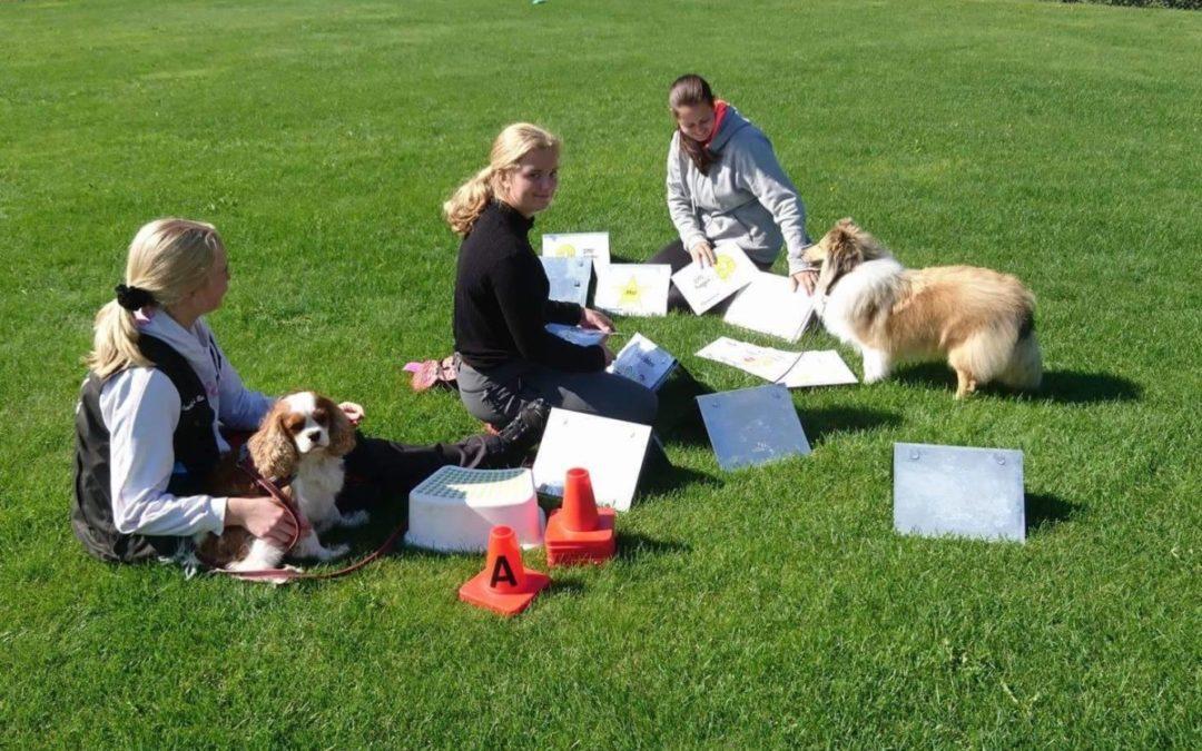 Stallträning för våra nya elever och hundar!