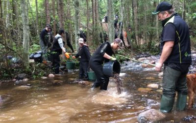 Biotopvård i strömmande vatten