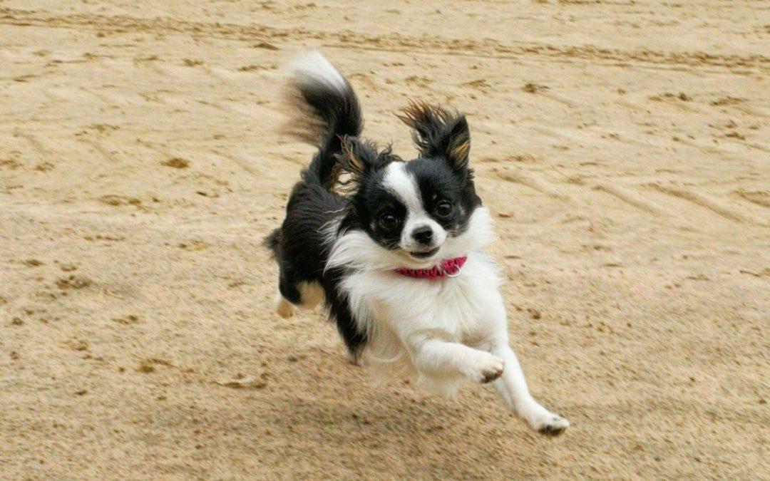 Hundsport vid Greyhound Park i Borås