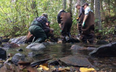 Biotopvårdsarbete i rinnande vatten