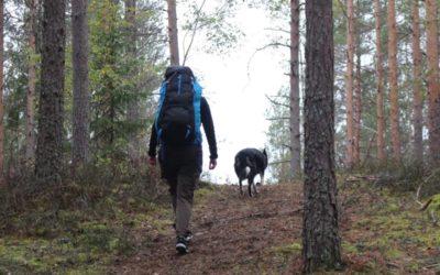 """Hundsportare på """"fritids-vandring"""""""