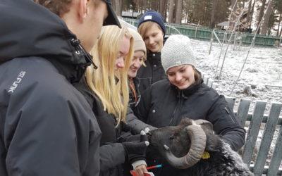 Praktiska djurkurser på Hundsport!