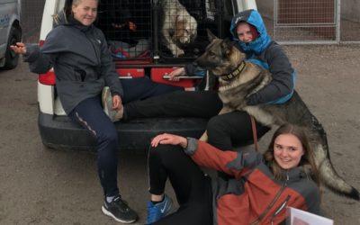 Träning inför skolmästerskapen i hundsport